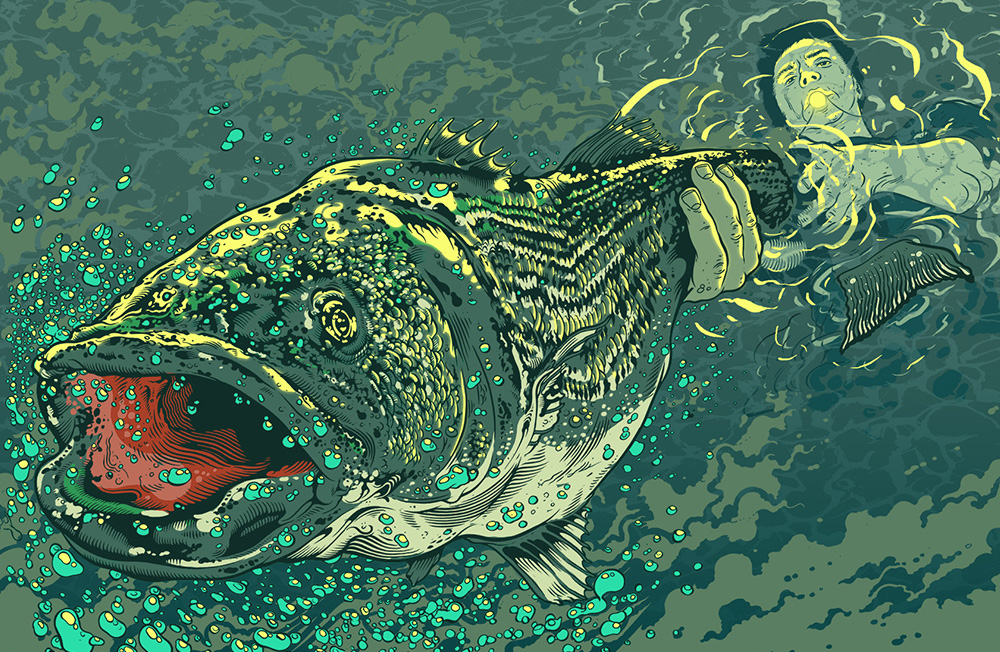 Illustration of a fish, commissioned by