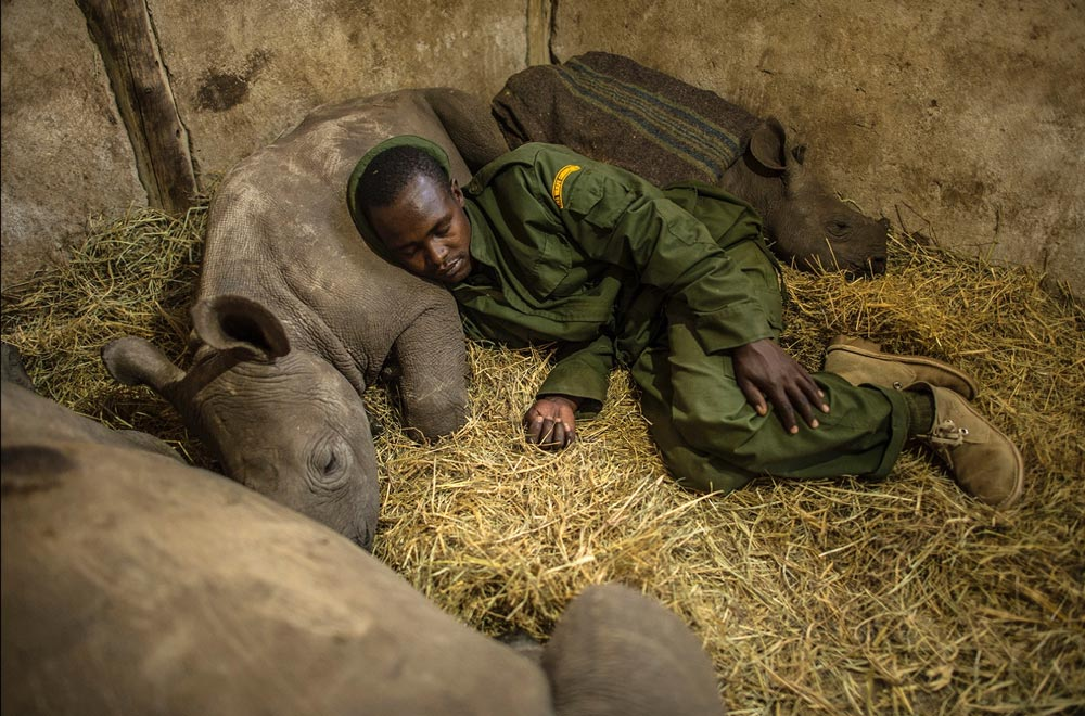 Ami Vitale has been documenting conservation efforts aimed at saving rhinos in Africa. This photo shows juvenile rhinos and one of their human protectors.
