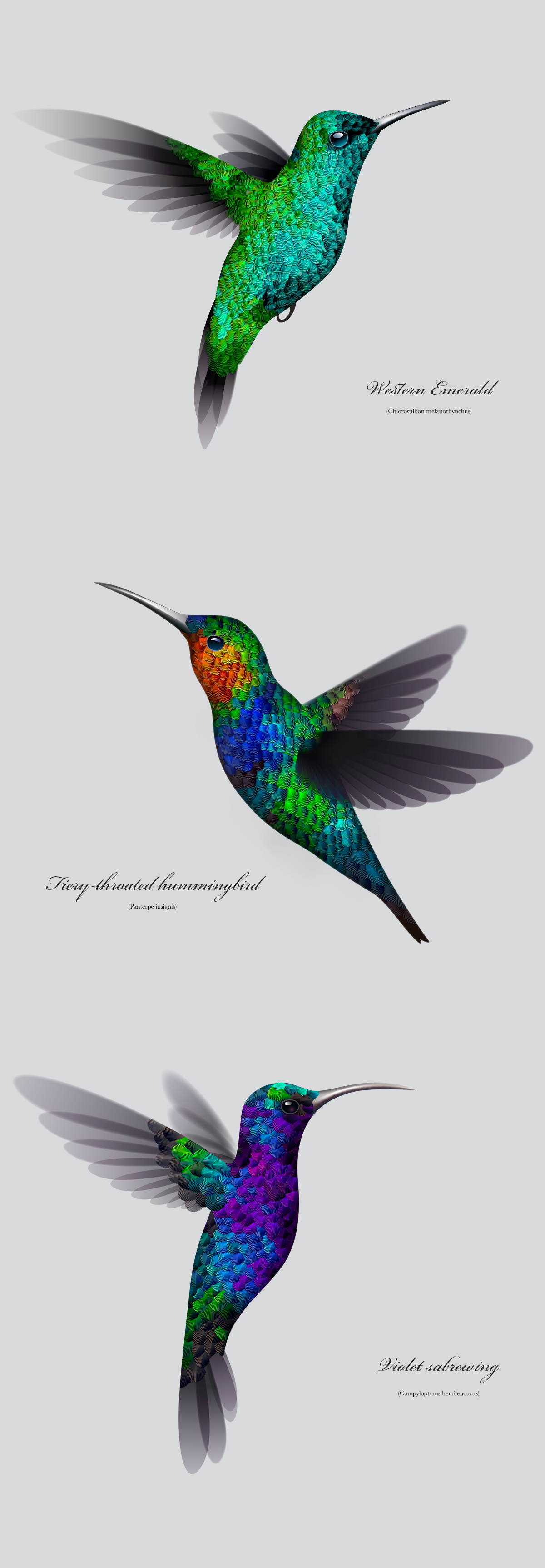 Illustrator Experiment Making A Hummingbird Create