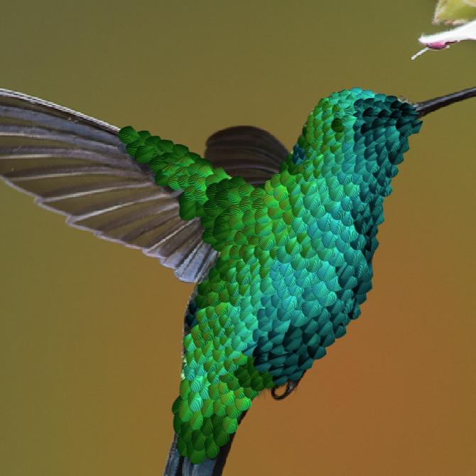 illustrator experiment making a hummingbird create