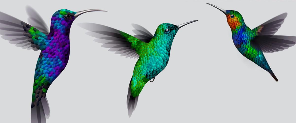a381c67811955 Illustrator Experiment: Making a Hummingbird | Create