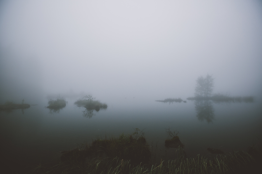 photograph of a misty swamp by Julia Nimke