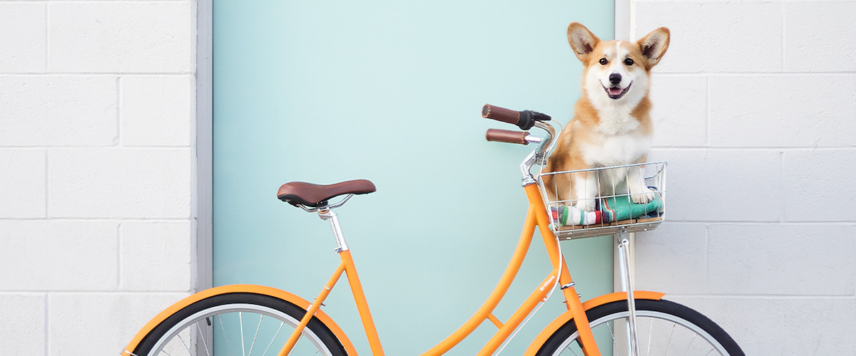 A photo of Geordi la Corgi on a bicycle