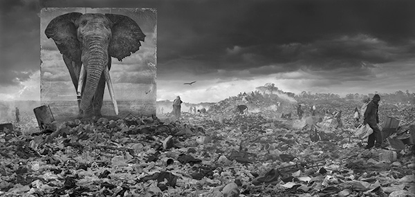 "Nick Brandt created this image, entitled ""Wasteland with Elephant, 2015."""