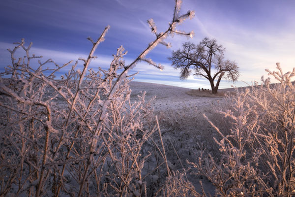 To get both the foreground and background of this winter landscape in focus, Nick Page shot the scene using the focus stacking technique.