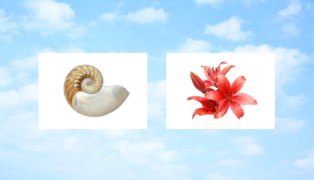Blue sky is in the background, Nautilus shell and red flower, both on white backgrounds, display in front