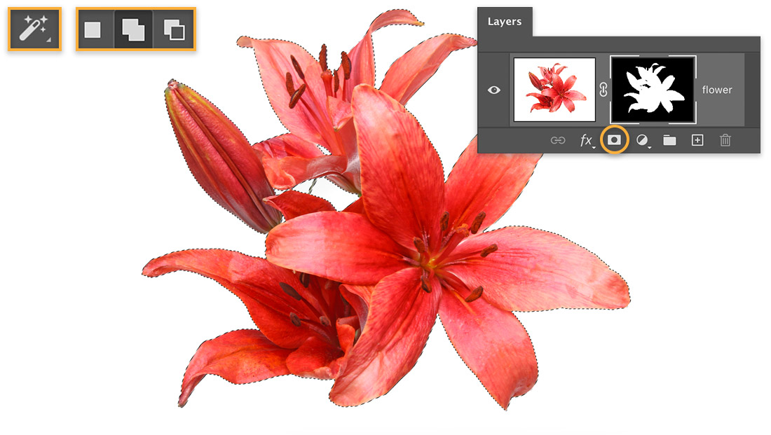 Red flower with marching ants selection, Magic Wand tool & options display upper left, Layers panel shows mask on layer