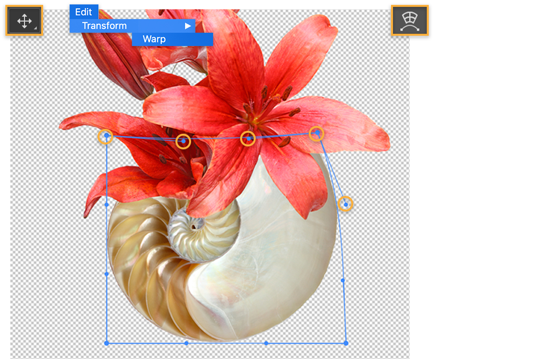 Red flower is above nautilus shell, Move tool icon is upper left, Warp tool is upper right, Warp tool boundary around shell